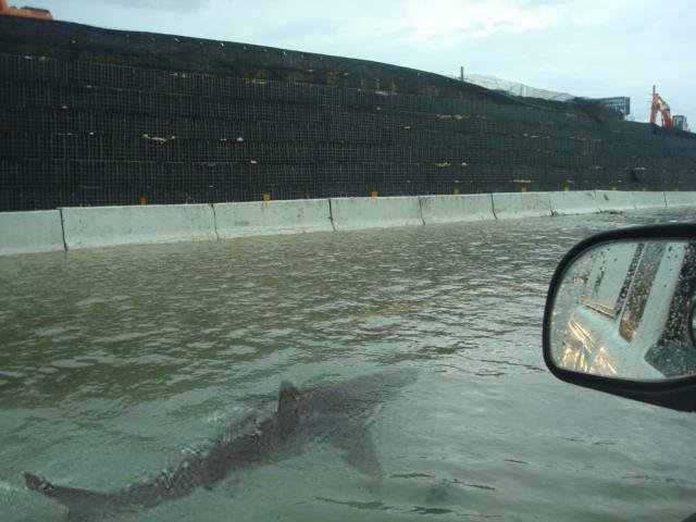 Fake image of a shark swimming next to a car