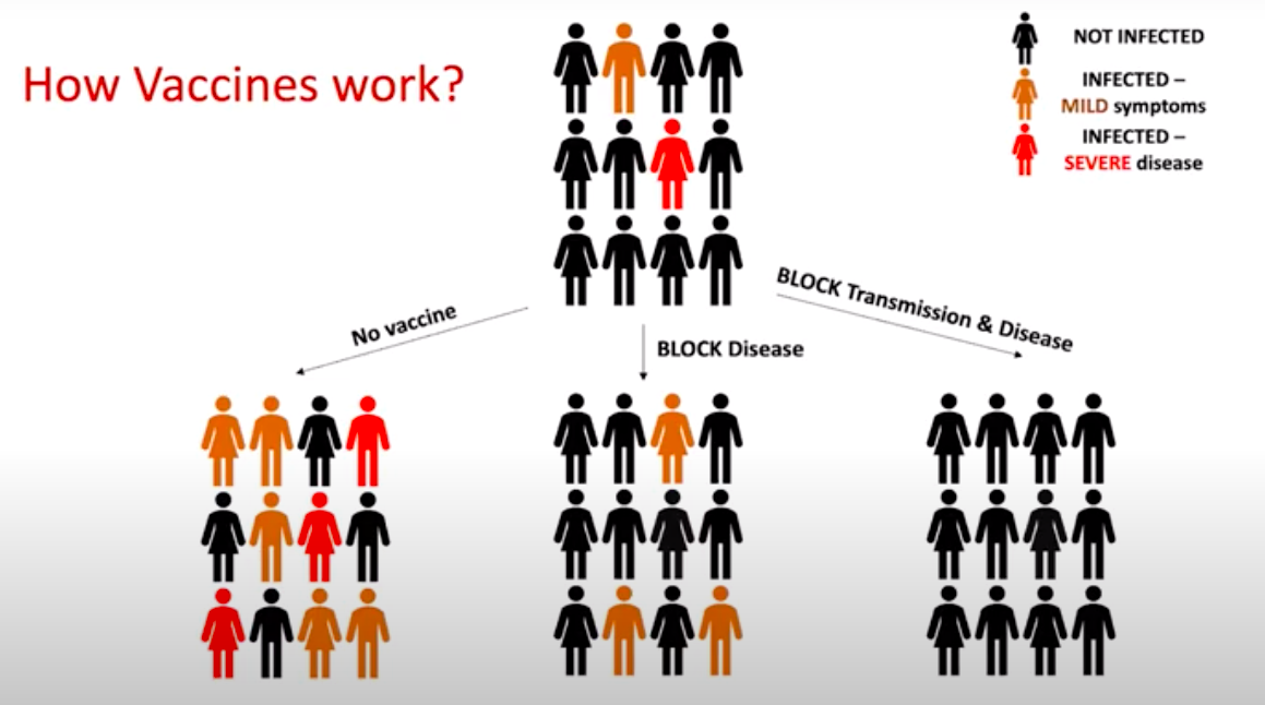 In an illustration, a group of people splits into three separate groups: No vaccine, BLOCK disease, BLOCK transmission & disease. Number of severe infections falls in group 2, but group 3 has no infections at all.